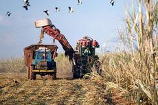 PBB: Harga Pangan Dunia Melonjak ke Rekor Tertinggi dalam 6 Tahun Terakhir
