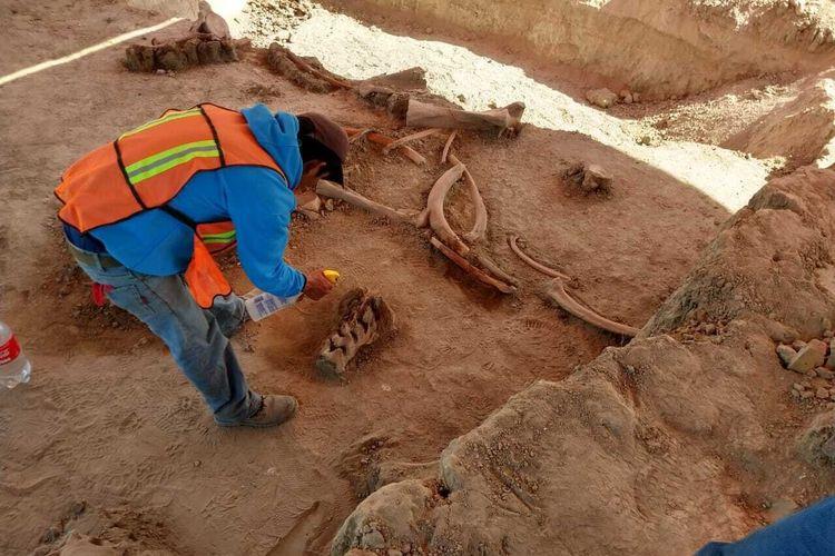Fosil mammoth ditemukan di lokasi bandara baru yang sedang dibangun di utara Mexico City.