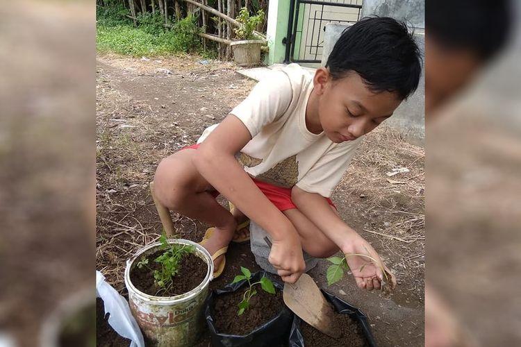 Pengalaman belajar di rumah siswa Kelas VI SDN Gumilir 06 Cilacap, Jawa Tengah, salah satunya diisi dengan praktek menanam yang dilakukan bersama orangtua.