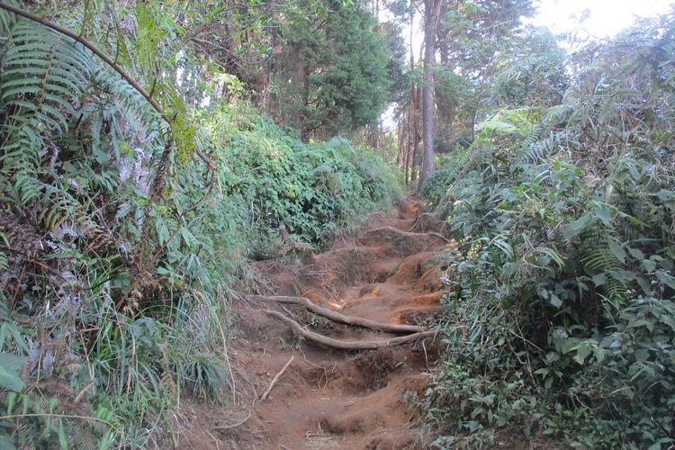 Jalur pendakian via Dworowati.