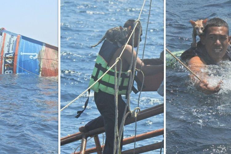 Kolase foto pelaut Angkatan Laut Thailand yang menyelamatkan empat anak kucing dari kapal yang tenggelam di Laut Andaman, Selasa (2/3/2021).
