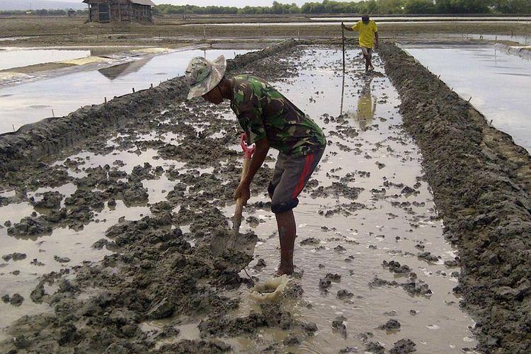 Petambak beralih menjadi petani garam, Jumat (28/7/2017)