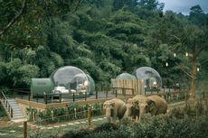 Unik, Resor di Thailand Tawarkan Pengalaman Menginap Bersama Gajah