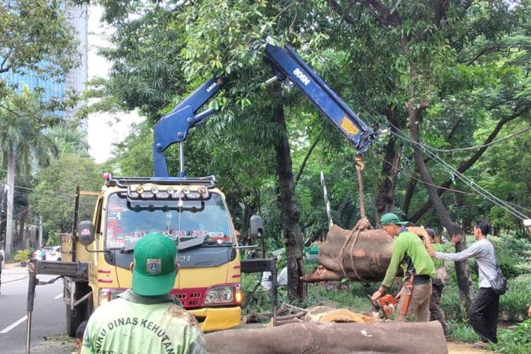 Sebuah pohon tumbang di Jalan Purworejo, Menteng, Jakarta Pusat, Kamis (4/2/2021) siang. Pohon tersebut menimpa sebuah mobil.