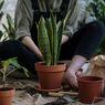 Seberapa Sering Harus Mengganti Tanah pada Pot Tanaman?