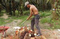 Perbaiki Tata Kelola, Pemerintah Diminta Lanjutkan Moratorium Sawit