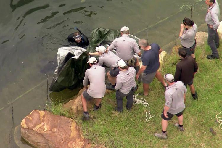 Petugas terlihat sedang menutupi simpanse menggunakan terpal sebelum mengeluarkan jasadnya dari dalam air.
