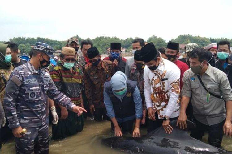 Gubernur Jawa Timur, Khofifah Indar Parawansa dan Bupati Bangkalan, Abdul Latif Imran saat melihat langsung kondisi hiu paus pilot di perairan Modung, Kabupaten Bangkalan, Jumat (29/2/2021).