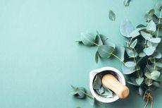 Kementan Bakal Gandeng UI untuk Uji Klinis Produk Eucalyptus
