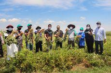 Hasil Produksi Petani Kacang Mitra TaniHub Bakal Diserap Garudafood