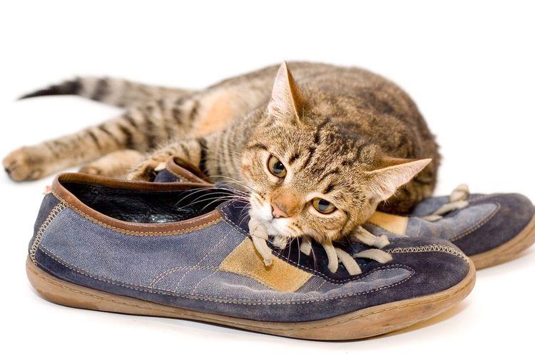 Ilustrasi kucing berada di atas sepatu.