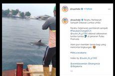 Video Viral Lumba-lumba di Pulau Pramuka, Ahli: Tidak Aneh dan Berkah Pandemi