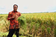 Ekspor Beras Premium saat Kemarau, Bukti Kemandirian Pangan Indonesia