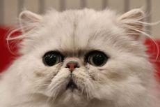 Eks Tentara Cari Kucingnya yang Hilang Sambil Todongkan Senapan, 1 Wanita Disekap