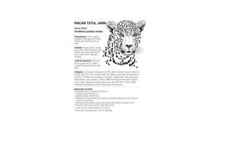 Informasi macan tutul Jawa