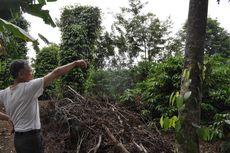 Ketika Kopi Membantu Veteran Vietnam Membesarkan Keluarganya