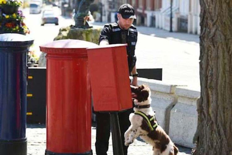 Kepolisian Inggris mengerahkan pasukan anjing untuk memeriksa bak sampah di sekitar area pernikahan Pangeran Harry dan Meghan Markle. (Twitter/Kepolisian Thames Valley).