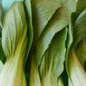 6 Cara Rebus Sayuran agar Terlihat Segar dan Tetap Hijau