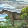 Fosil Utuh