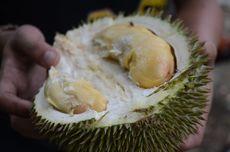 Cara Kemas Durian agar Tidak Bau di Pesawat, Tips dari Ucok Durian