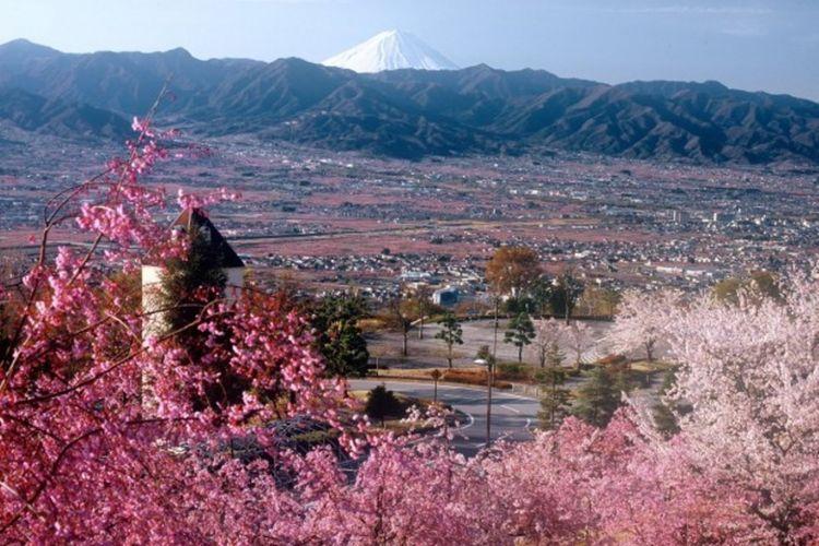 pemandangan bunga persik dan sakura serta Gunung Fuji di daerah Yamanashi