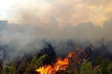 144,25 Hektar Lahan Terbakar, 32 Tersangka Ditangkap