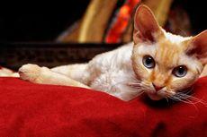 4 Cara Menghibur Kucing yang Sedang Depresi