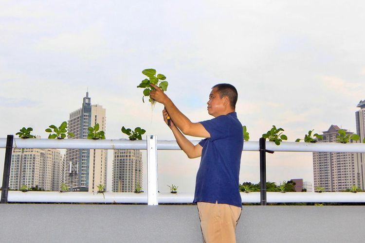 lokasi talang air di rooftop rumahnya tempat ignasius jonan menanam sayuran hidroponiknya