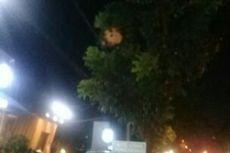 Warga Was-was dengan Keberadaan Sarang Tawon Vespa di Bintaro