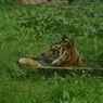 Kebun Binatang di Indonesia Menghadapi Krisis