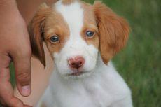 Apakah Anjing Alami Perubahan Suasana Hati? Ini Penjelasannya