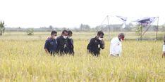 Tingkatkan Kesejahteraan Petani, Pemkab Simalungun Bangun JUT