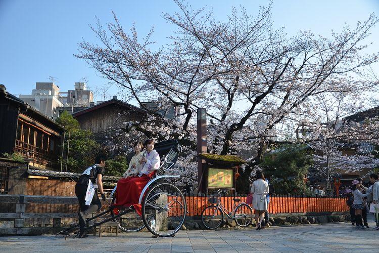 Sakura di Kyoto, Jepang