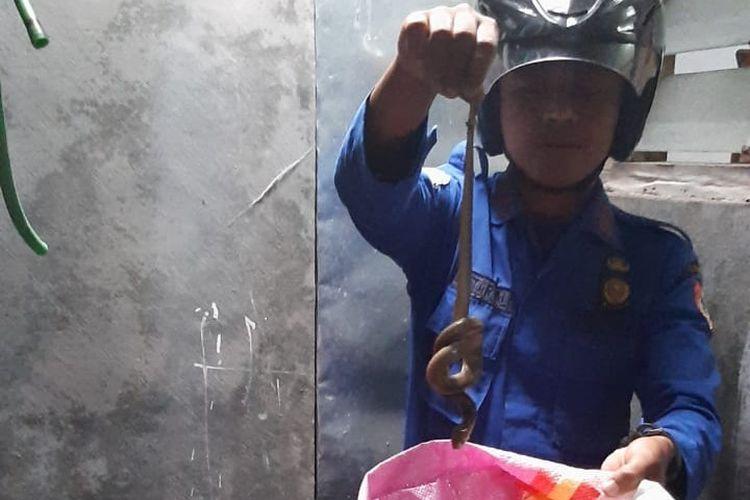 Foto dokumentasi Damkar Jember: Petugas Damkar saat menunjukkan ular kobra yang berhasil dievakuasi