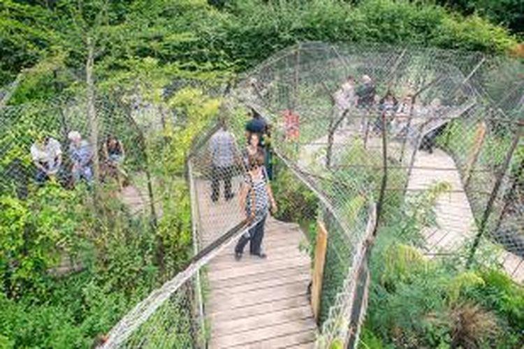 Pemasangan jalan setapak itu dilakukan di tengah taman yang dalam sejarahnya 'tidak dicintai' karena di dalamnya tumbuh tanaman-tanaman mengandung bahan berbahaya, antara lain mengandung zat psikotropika, narkotika, dan tanaman entheogen.