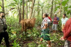Dikejar Polisi dan Warga, Pencuri Tinggalkan 4 Ekor Sapi di Hutan
