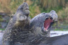 Pulau Terpencil di Dunia Bakal Jadi Zona Perlindungan Laut Terbesar