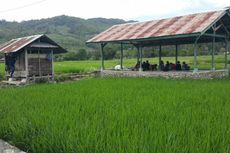 Kelurahan di Palopo Ini Wilayah