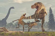 Fosil Dinosaurus Seukuran Lapangan Basket Ditemukan di Australia