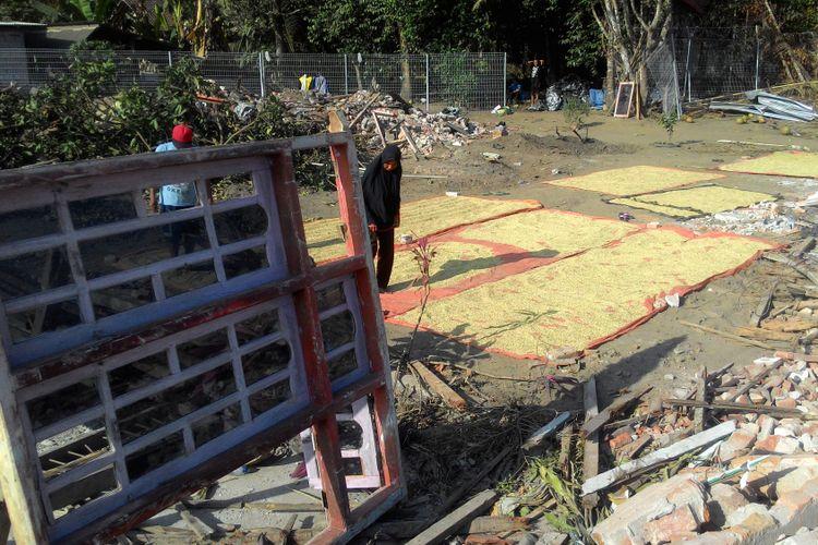 Keluarga besar Sumiyo baru saja panen padi sebanyak 5 bagor (karung beras). Mereka menjemur gabah di antara puing rumah mereka di lahan yang akan dibangun bandara NYIA.