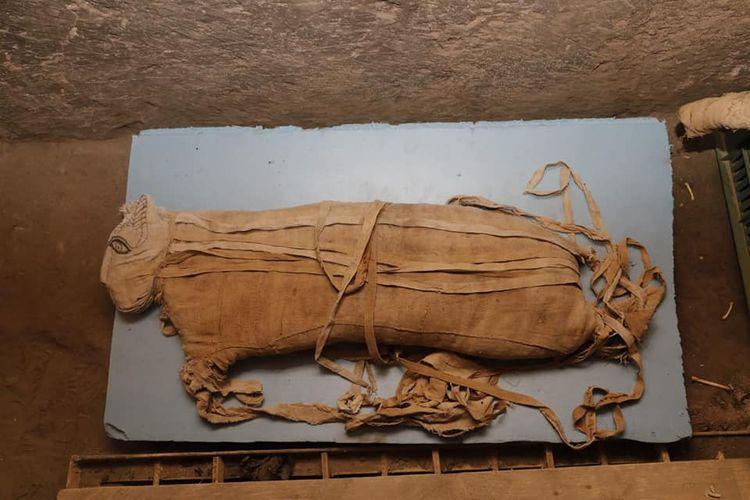 Mumi kucing dipamerkan di Saqqara, Mesir.