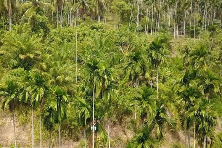 Siti Hajar mendapat Rp 2.000 untuk setiap pohon yang dipanjatnya.