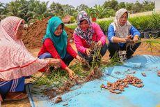 Hadapi Pandemi, APP Sinar Mas Ajak Desa Tingkatkan Produksi Jahe Merah dan Madu