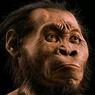 Pithecanthropus Erectus, Fosil Manusia Purba Pertama yang Ditemukan di Indonesia