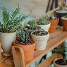 5 Kesalahan Perawatan yang Bikin Tanaman Kaktus Cepat Busuk