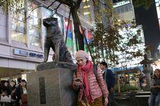 Si Anjing Setia Hachiko Kini dalam Sekotak Cokelat Mewah...