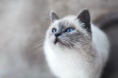 3 Penyebab Utama Kucing Kencing Darah