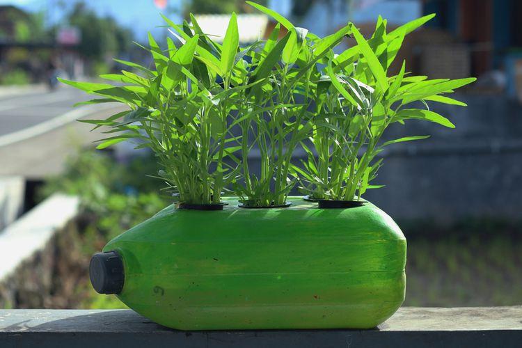 Ilustrasi kangkung ditanam dengan metode hidroponik. Media tanam berupa botol plastik bekas.