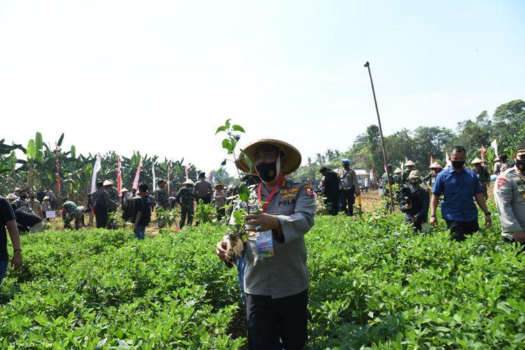 Lahan tidur 11 hektar di kawasan Jatiuwung Kota Tangerang dijadikan lahan pertanian untuk ketahanan pangan di masa pandemi Covid-19, Sabtu (1/8/2020)