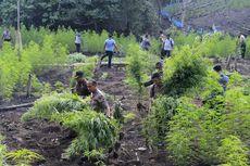 Bos Narkoba yang Ditembak Mati Punya Ladang Ganja 10 Hektare di Aceh